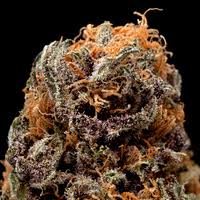 , Blueberry Cannabis Strain Review