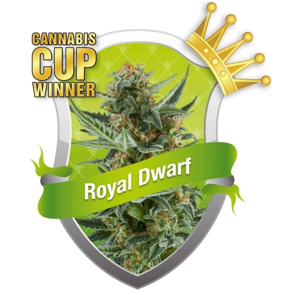 , Cannabis Cup Winning Royal Dwarf Auto-Flowering Cannabis Seeds Up For Grabs!
