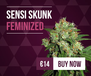MediumRectangle-skunk1-fem-cheap200-200