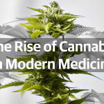 The Rise of Cannabis in Modern Medicine