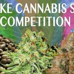 Win Free Feminised Cannabis Seeds!