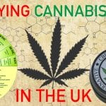 The Future of the UK CBD Market : What Do ..