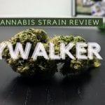 Skywalker OG Cannabis Strain Review
