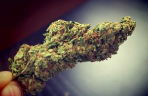 White Widow Cannabis Strain Review