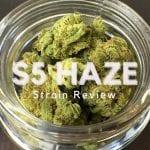 S5 Haze Cannabis Strain Review