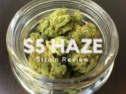 S5 Haze Review