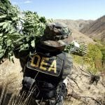 DEA: Cannabis is NOT a gateway drug