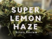 Super Lemon Haze Strain Review