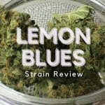 Lemon Blues Cannabis Strain Review