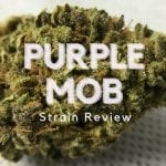 Purple Mother of Berries Cannabis Strain Review