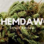 Chemdawg Strain Review