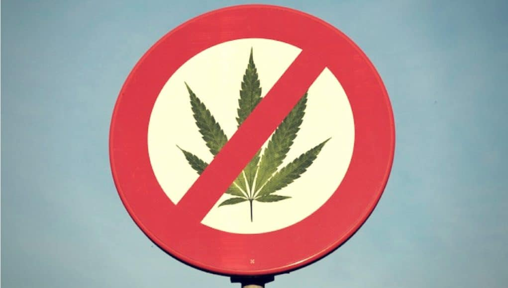 cannabis prohibition and terrorism