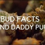 Bud Facts : Grand Daddy Purple (GDP)