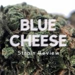 Blue Cheese Cannabis Strain Review
