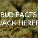 Bud Facts: Jack Herer