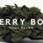 Cherry Bomb Cannabis Strain Review