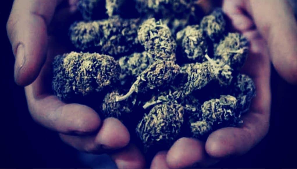 Cannabis And The Gateway Theory Ismoke Magazine