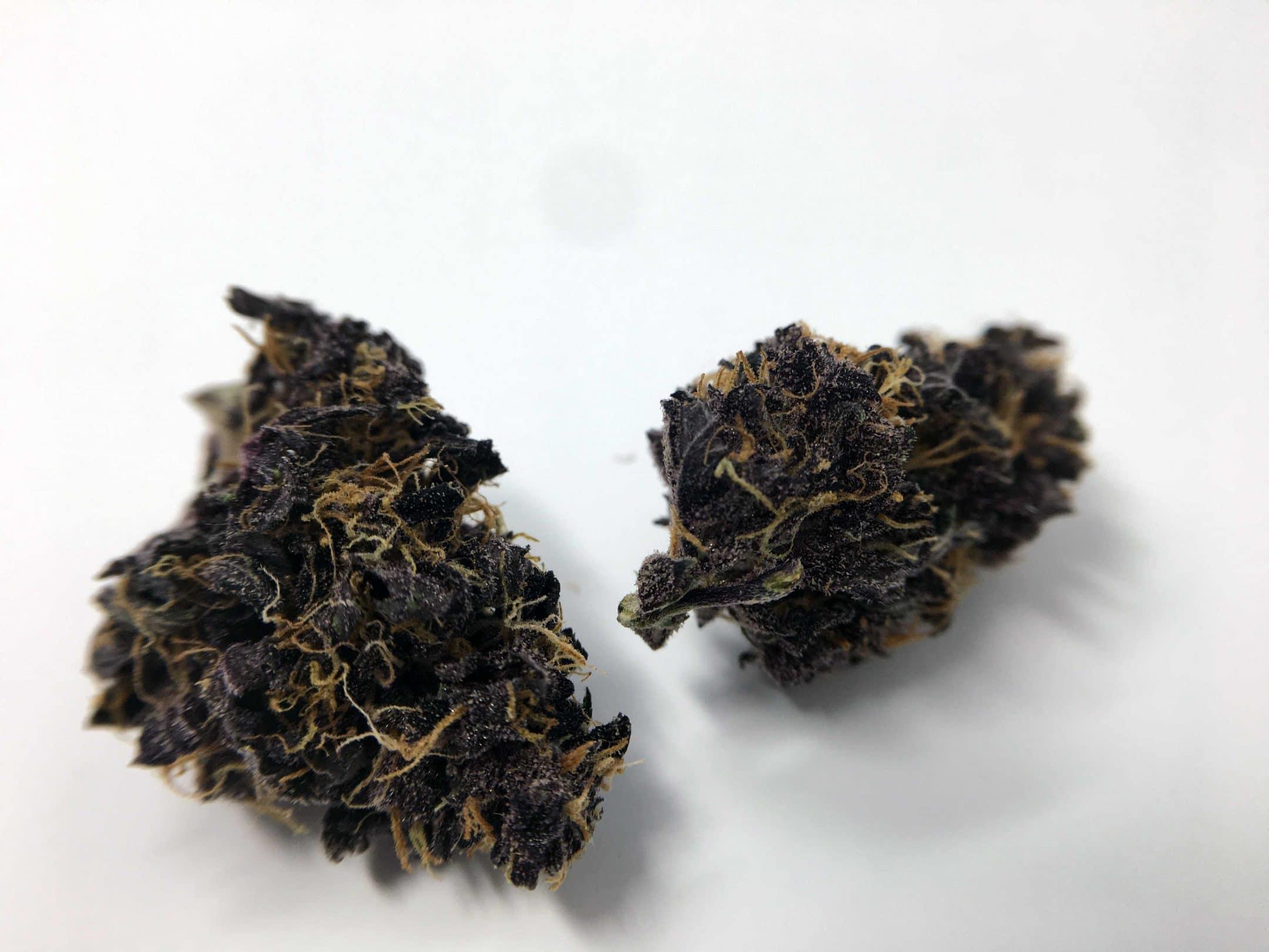 blackberry weed - photo #20