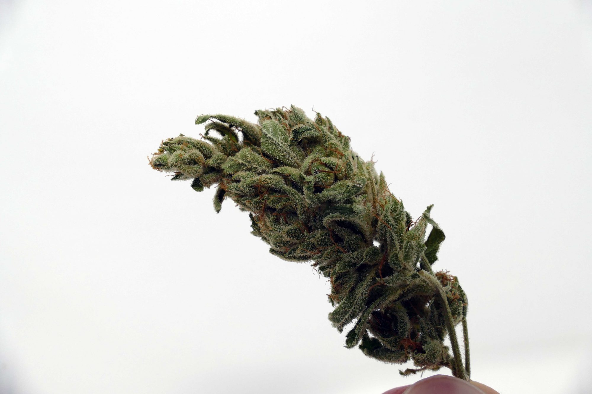 Organic Gorilla Glue #4