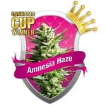 ISMOKE Competition – Fancy Winning Yourself Some Amnesia Haze Seeds?