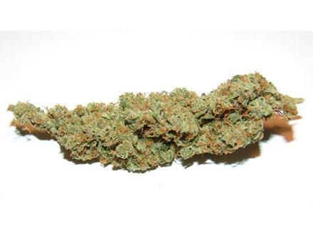 , ISMOKE'S Top 5 Cannabis Strains: Haze