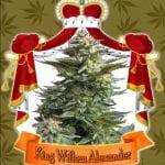 New Dutch King Willem-Alexander has his own cannabis strain