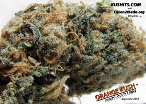 , What Strains Pack The Most THC? 5 of The Strongest Cannabis Strains Known To Man