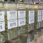 Cannabis Prices Are Falling Across the US Due to Legalisation