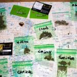 Four Twenty Travellers Visit Barcelona Cannabis Clubs