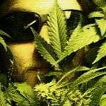 ISMOKE Interviews Greg de Hoedt, Chairman of the UK Cannabis ..