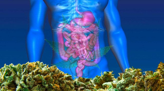 cannabis for crohns disease