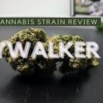 Skywalker OG Cannabis Strain Review