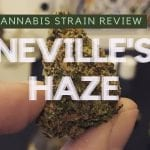 Neville's Haze Cannabis Strain Review