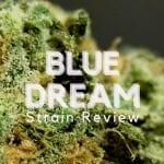Blue Dream Cannabis Strain Review