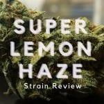 Super Lemon Haze Strain Review