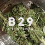B29 Cannabis Strain Review