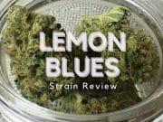 Lemon Blues Cannabis Strain