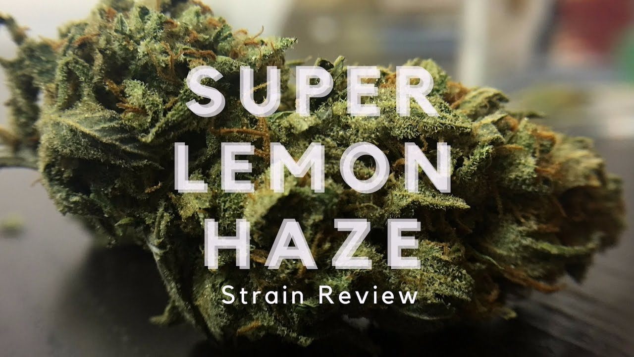 super wedding cake strain lemon strain review ismoke magazine 20639