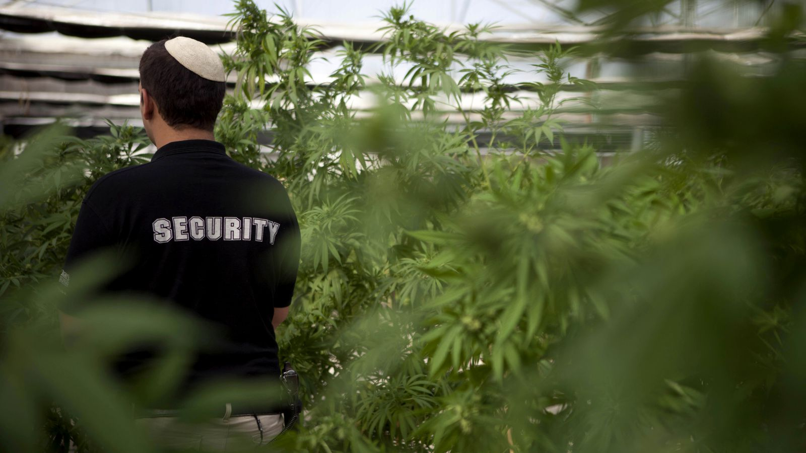 ", Israel makes move to ""decriminalise cannabis"""