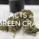 New Video Series : Bud Facts