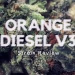 Orange Diesel V3 [ODV3] Cannabis Strain Review