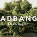 Headbanger Strain Review