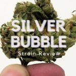 Silver Bubble Strain Review
