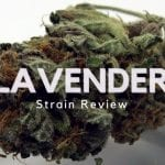 Lavender Cannabis Strain Review