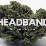 Headband Cannabis Strain Review