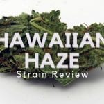 Hawaiian Haze Cannabis Strain Review