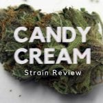 Candy Cream Cannabis Strain Review
