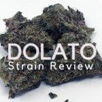 Dolato Cannabis Strain Review