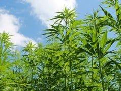 cannabis can help