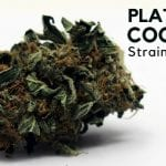 Platinum Girl Scout Cookies Strain Information